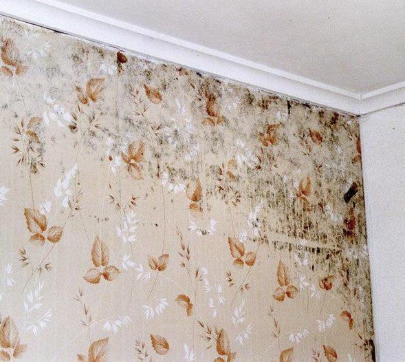 از بین بردن کپک زیر کاغذ دیواری